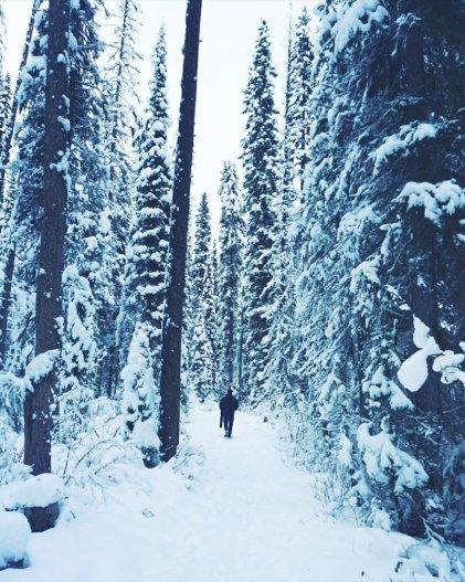 A stroll through the woods